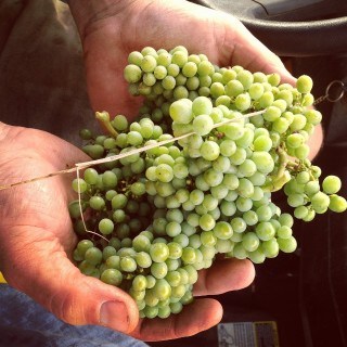 galafrey-dry-grown-chardonnay640x640