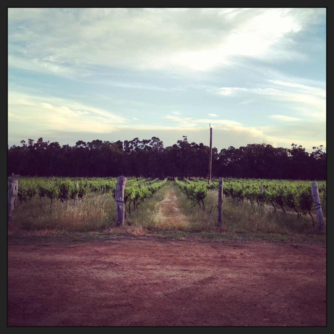 Our Special Dry Grown Vineyard- Galafrey Wines Australian Wines