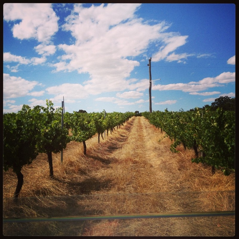 Why did we choose Mount Barker? Galafrey Wines Australian Wines